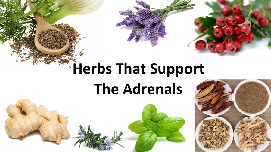 Herbs that Support the Adrenal Glands