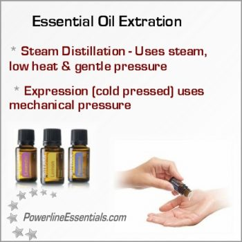 essential oil extration