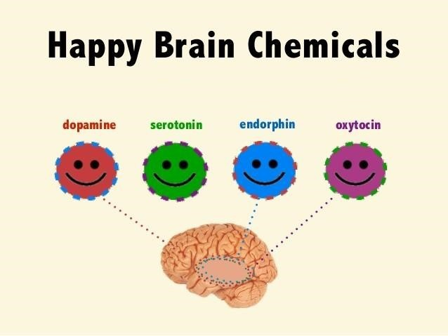 Happy Brain Chemicals